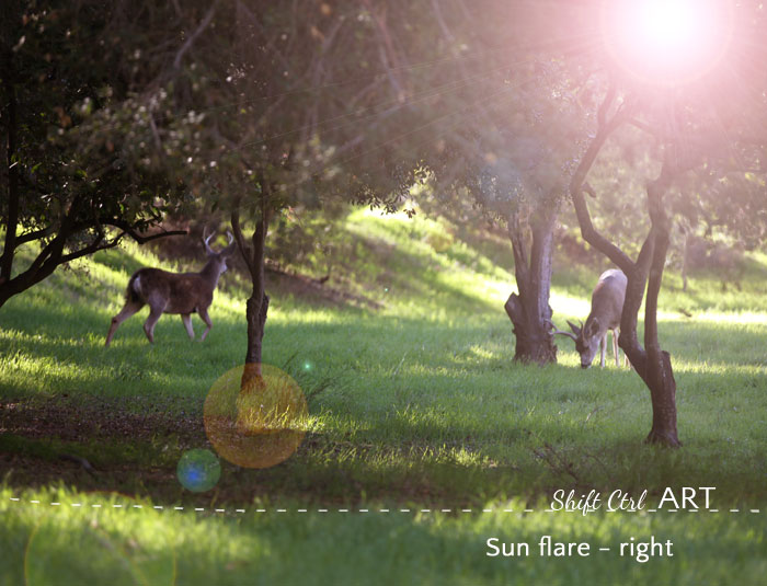 deer sunflare right