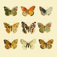 Vegan butterfly framed art paper craft 1