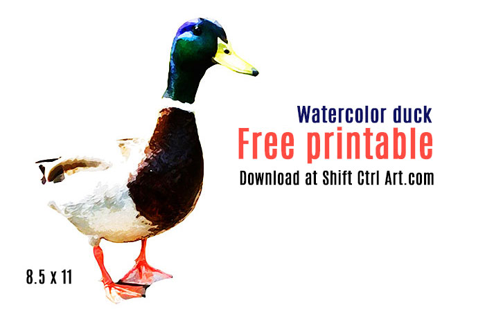 water color duck free printable 1