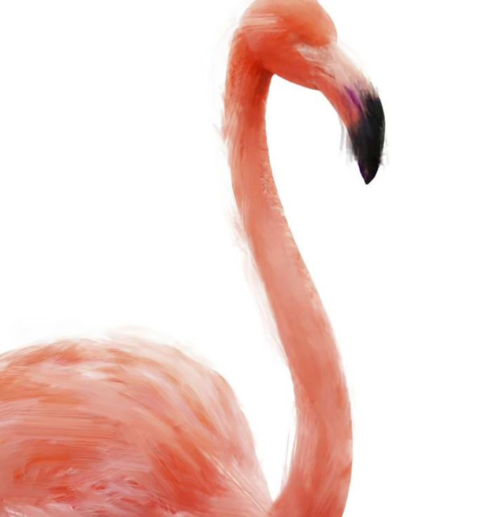Flamingo art 1