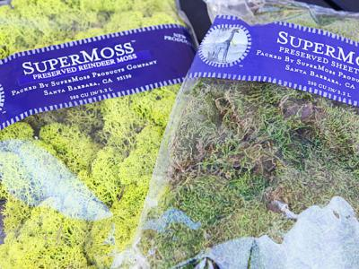 Great finds: Reindeer and sheet moss