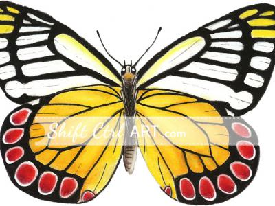 I used a butterfly drawing in my web design