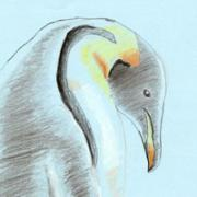 Penguin - color pencil