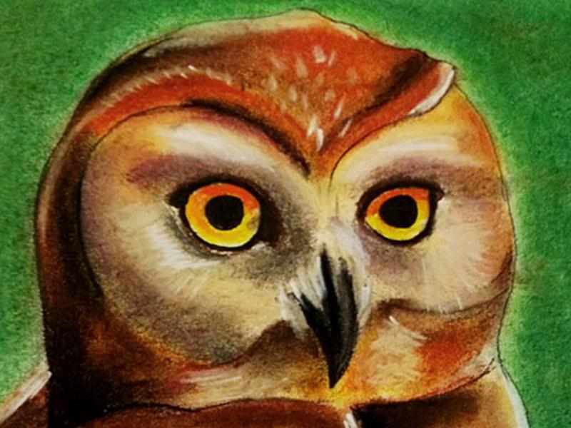 Art work: My newest pastel - an owl