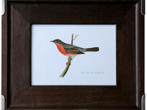 Great Find: thousands of plants, animal and seasonal illustrations