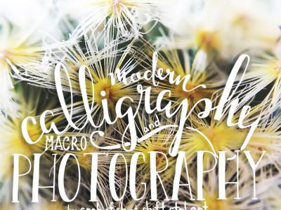 Great find: Modern calligraphy and macro photography with Mari Orr
